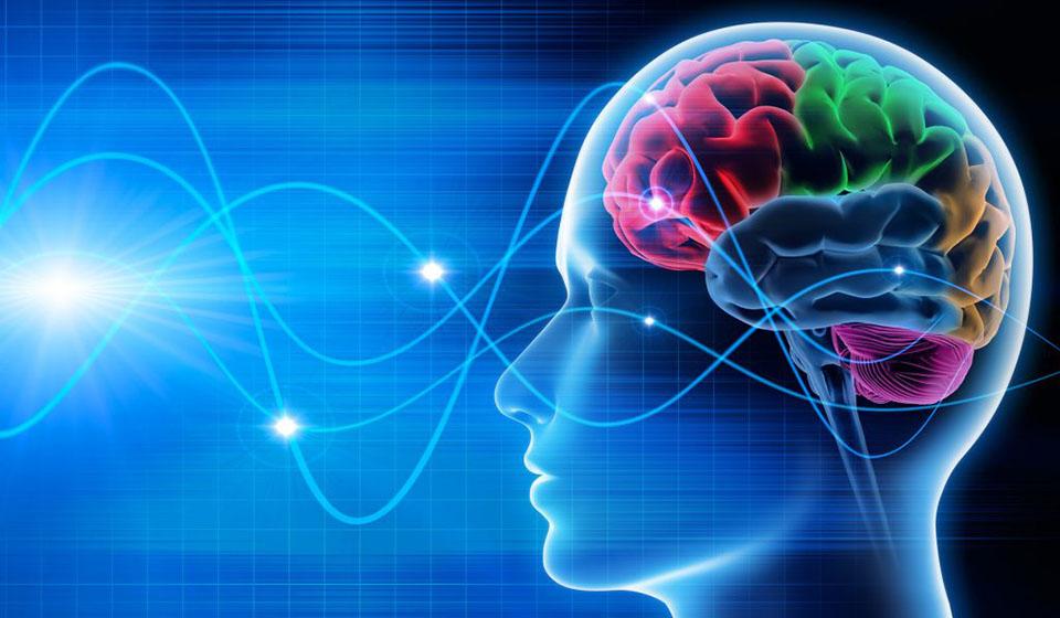 Principais-técnicas-de-Programação-Neurolinguística-casule