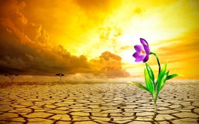 Cultivar a esperança em tempos de crise