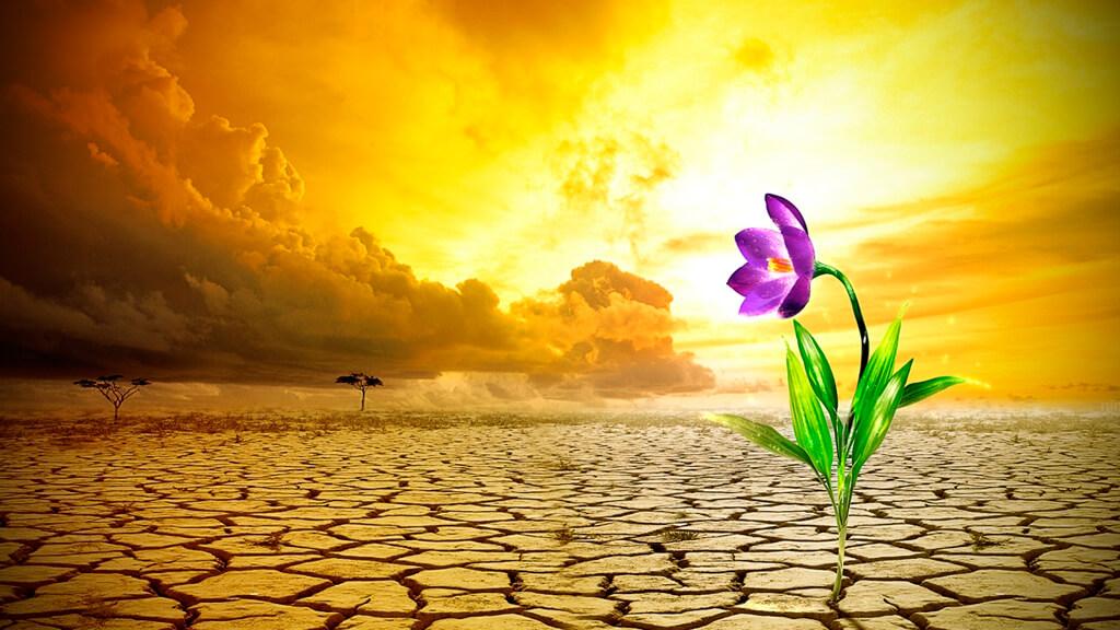 Cultivar-a-esperança-em-tempos-de-crise-blog-casule