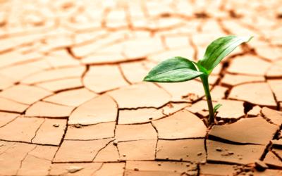 Como desenvolver resiliência para enfrentar a quarentena?