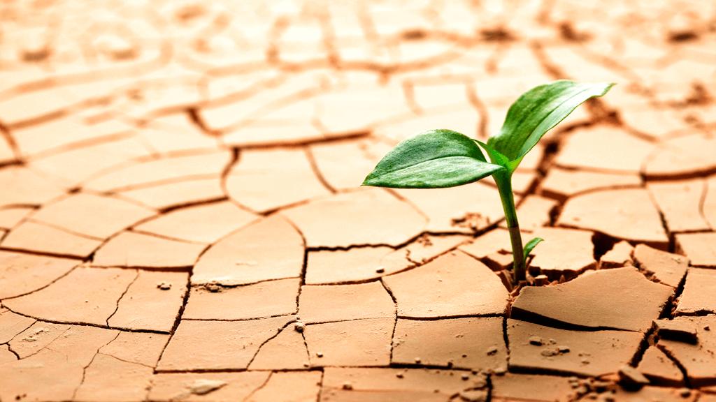 Como-desenvolver-resiliência-para-enfrentar-a-quarentena-blog-casule