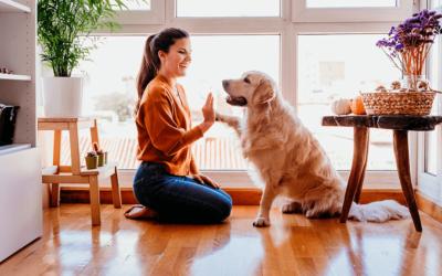 A contribuição dos pets durante o período de Isolamento