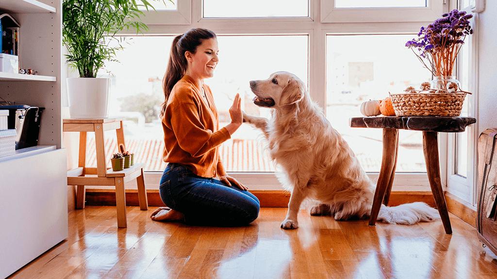 Terapia-e-Pets-blog-casule