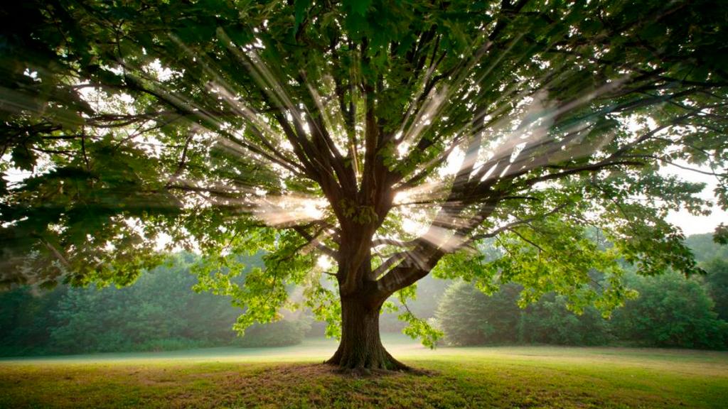 Árvore-dos-Sonhos